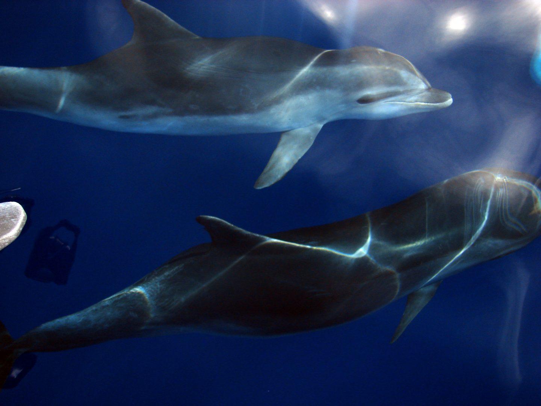 Bild von zwei Delfine im Meer