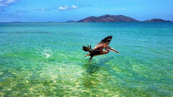 Bild vom Vogel im klaren Wasser vor Tortola