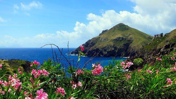 Bild vom Ausblick hinter Blumen auf Saba