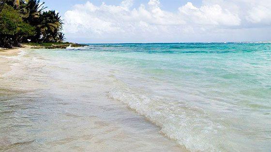 Bild einer Palme am Strand von Marie Galante