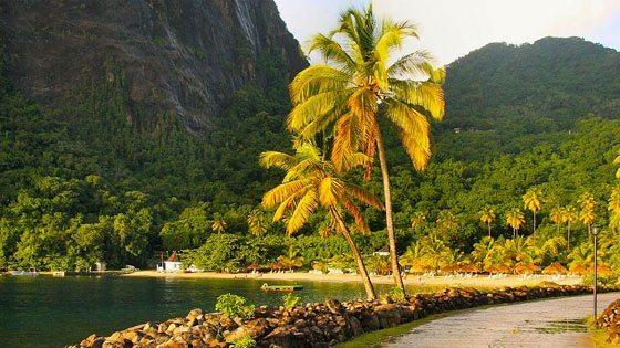 Bild einer Palme am Ufer nach einem Regenguss auf St. Lucia