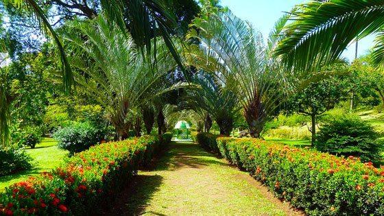 Bild vom botanischen Garten auf St. Vincent