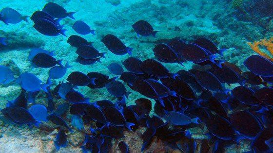 Bild von einer Schnorcheltour in den Tobago Cays