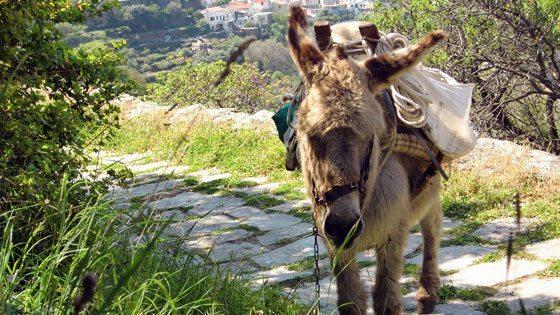Bild von einem Esel im grünen von Kea in den Kykladen