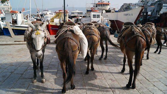 Bild einer Eselgruppe am Hafen von Hydra