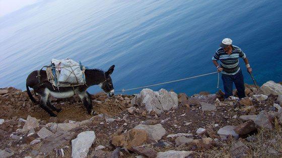 Bild von einem Griechen mit Esel in Mega Livadhi auf Serifos