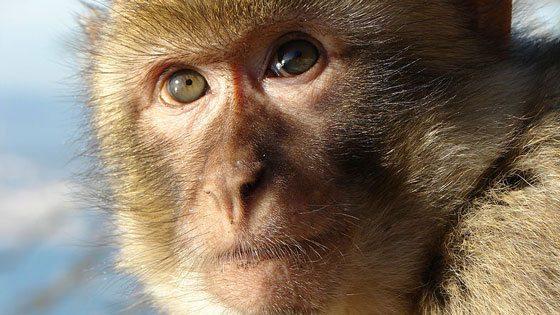 Bild von einem Affen