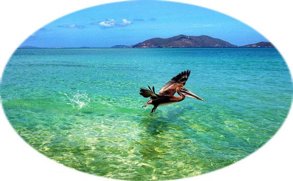 Entdecke mit SOS die fabelhafte Tierwelt der British Virgin Islands